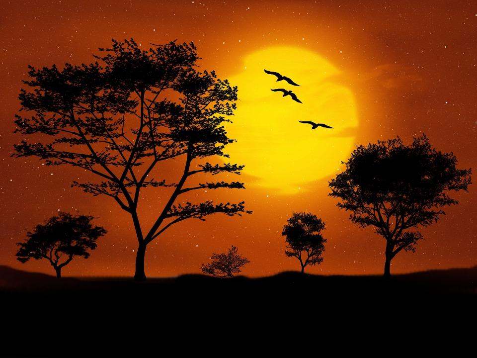 Digital Art, Landscape, Trees, Artwork, Moon, Moonlight