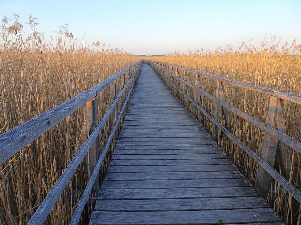 Away, Web, Target, Nature, Landscape, Spring Lake, Moor