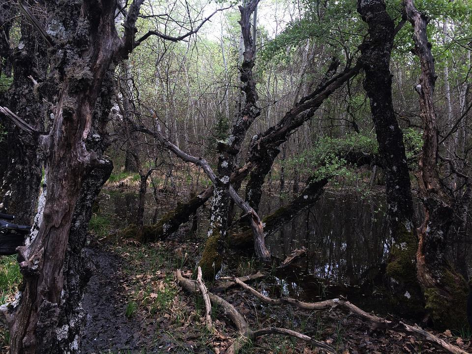 Provence, Swamp, Moor, Aesthetic, Weird, Wild, Forest
