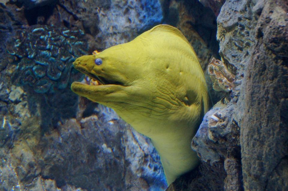 Yellow Head Moraine, Moraine, Fish