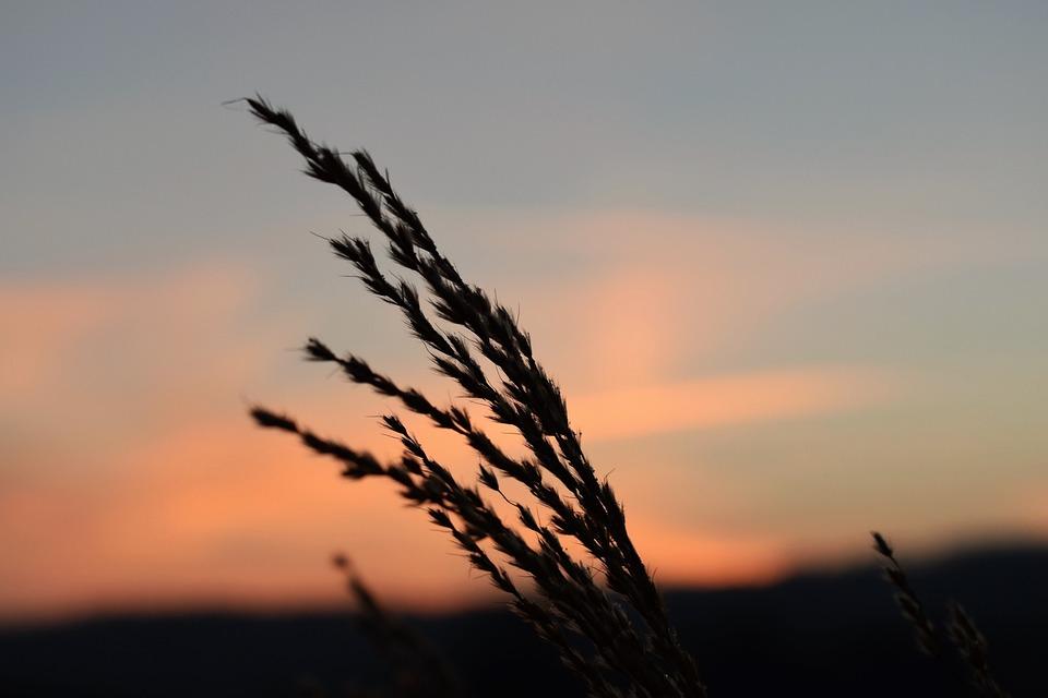 Grass, Morgenrot, Skies, Back Light, Landscape