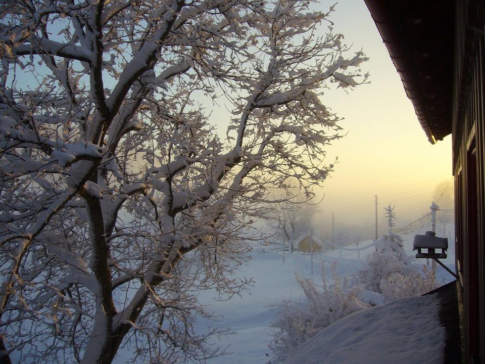 Snow, Winter Blast, Landscape, Morgenstimmung
