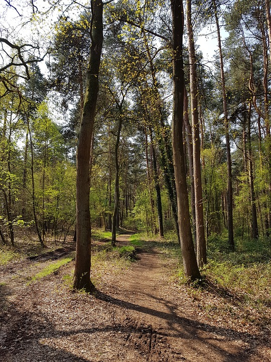 Forest Path, Trees, Forest, Morgenstimmung