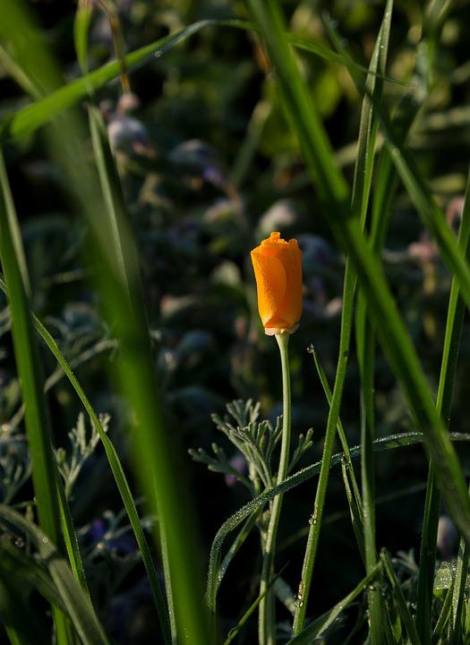 Flower, Morgentau, Meadow, Dewdrop, Nature, Blossom