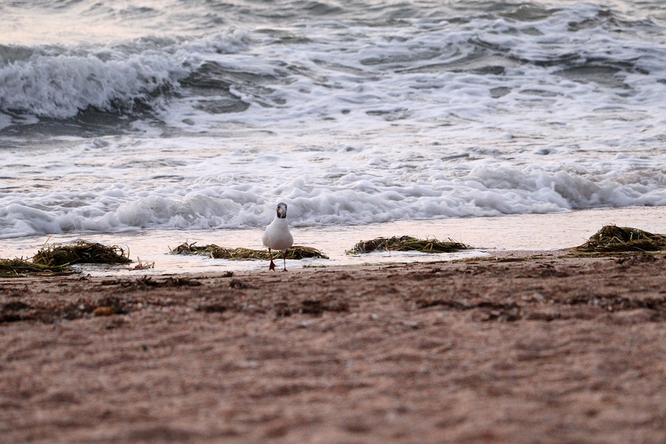 The Sea Of Azov, Morning, Seashore, Sea, Shore, Beach