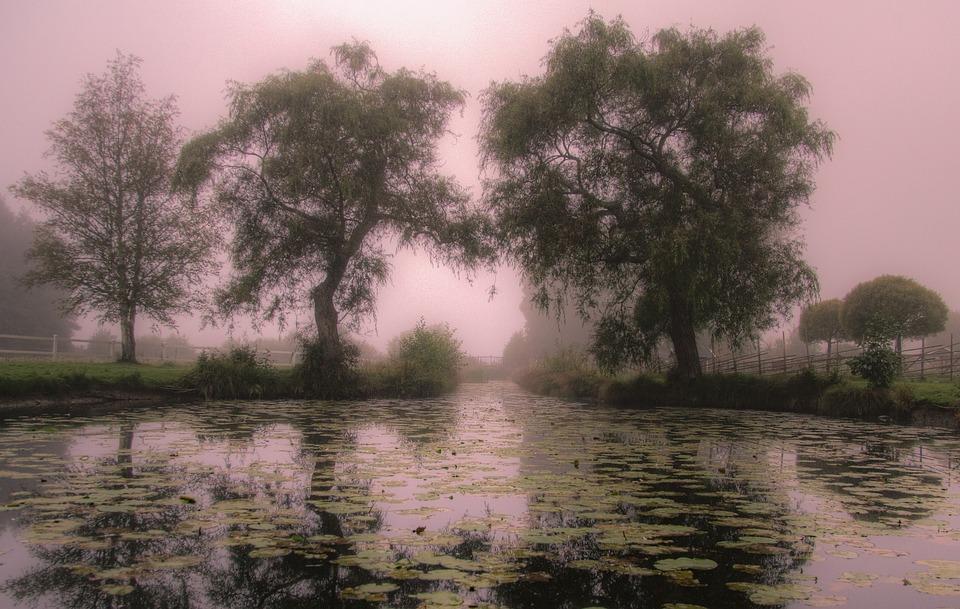 Morning Card, Mist, Sweden, Mirror Image, Nature