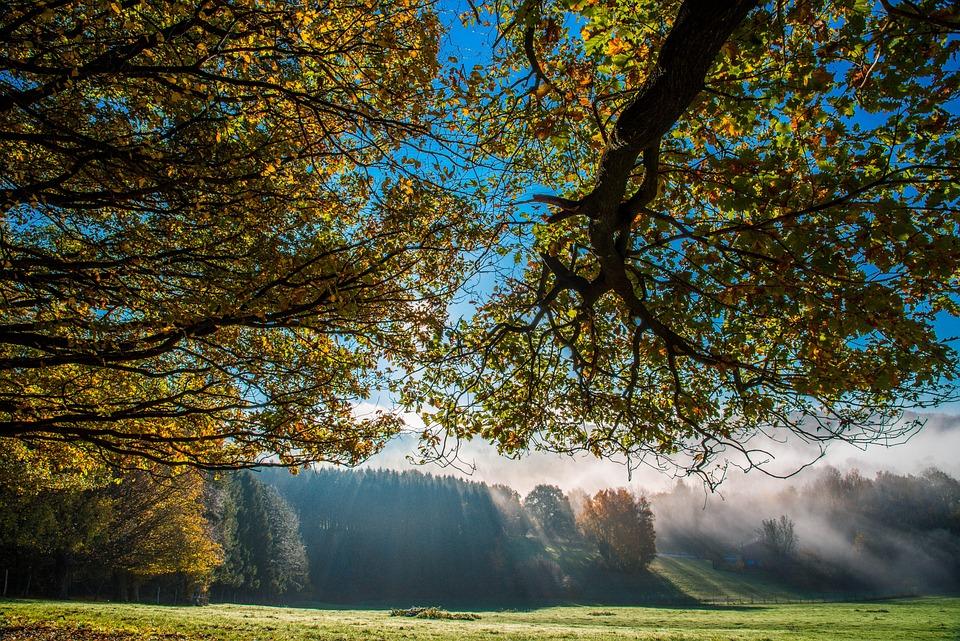 Trees, Fog, Morning Fog, Haze, Misty, Branches, Field