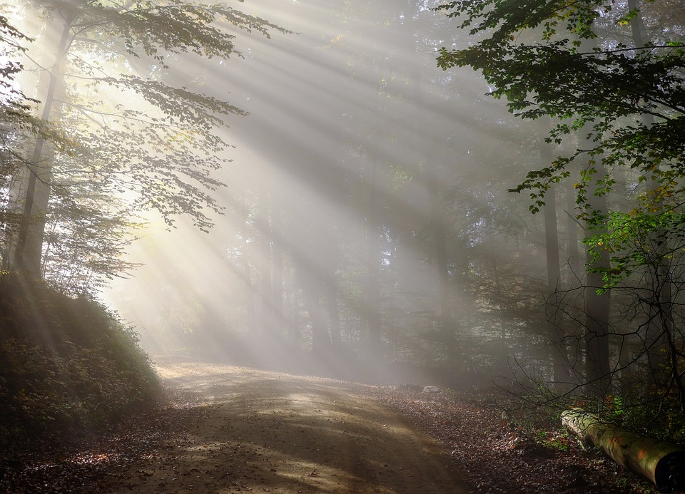 Rise, Morning, Fog, Sunbeam, Forest, Morgenstimmung