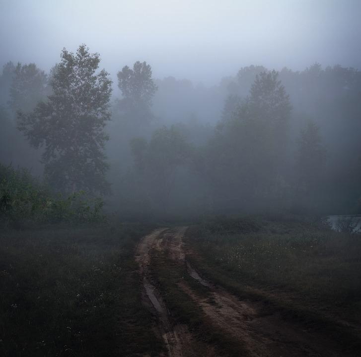 Morning, Fog, Road, Forest, Mystical, Summer, Landscape