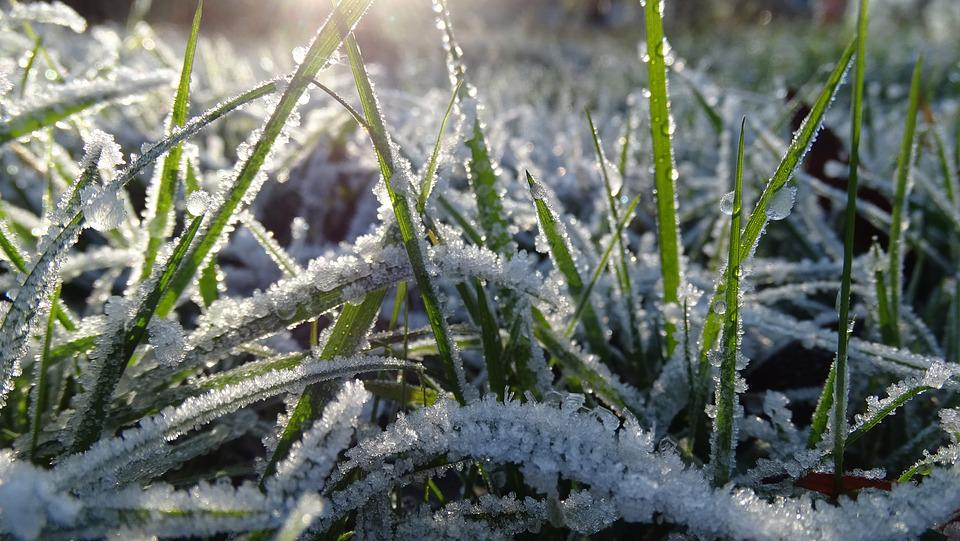 Grass, Ice, Frozen, Winter, Morning, Ripe, Nature