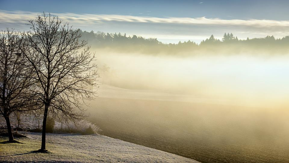 Winter, Morning, Fog, Tree, Forest, Nature, Landscape