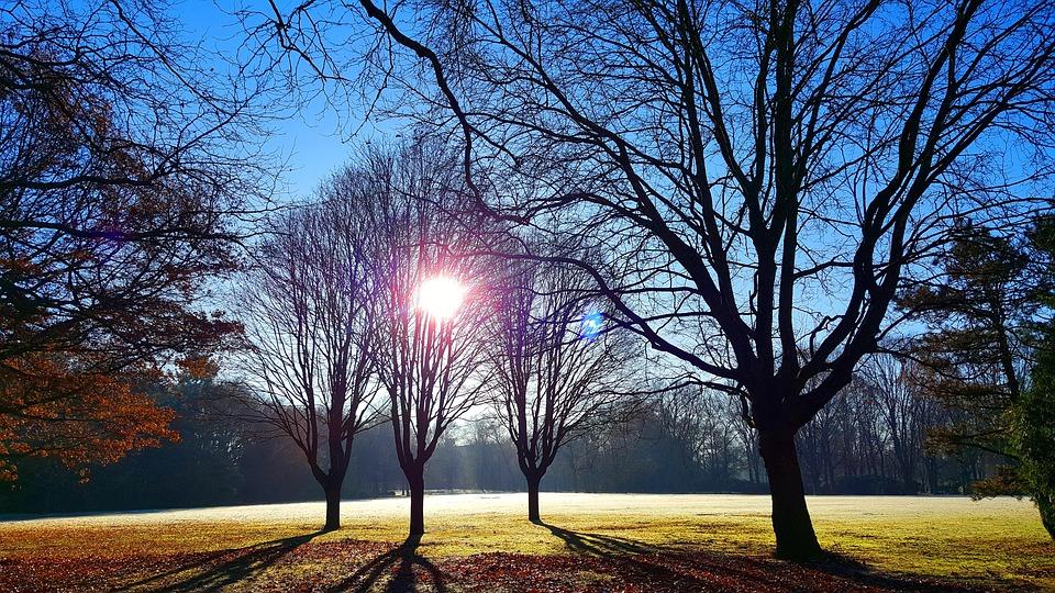Sunrise, Park, Landscape, Morning, Sunny