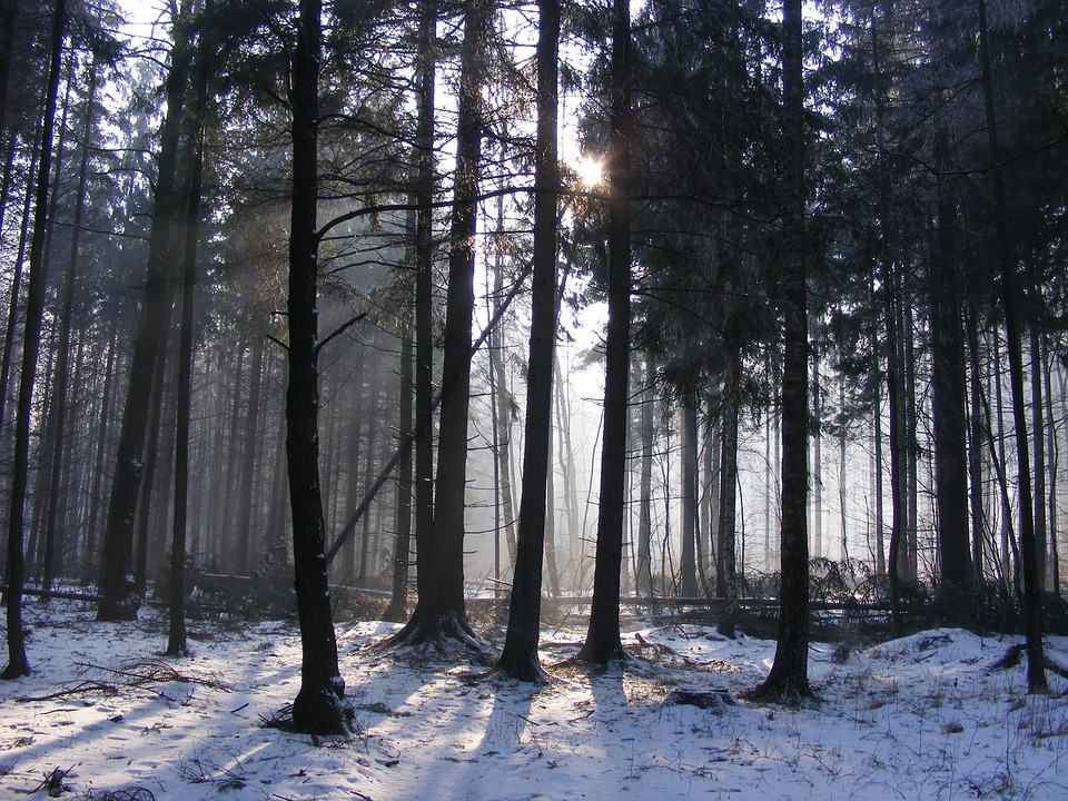 Forest, Winter, Snow, Trees, Frost, Landscape, Morning