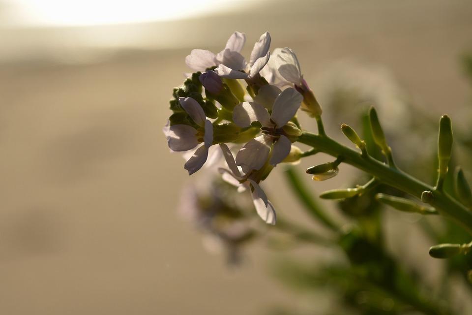 Flower, Morning, Light, Summer, Flowers, Nature