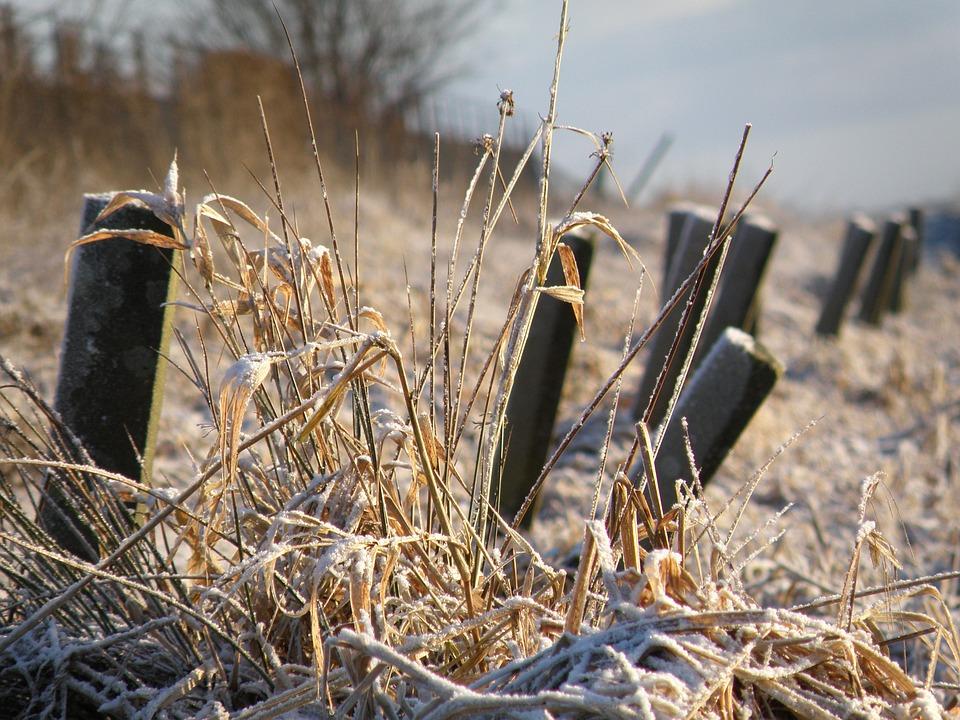 Posts, Winter, White, Nature, Morning, Freezing, Frozen