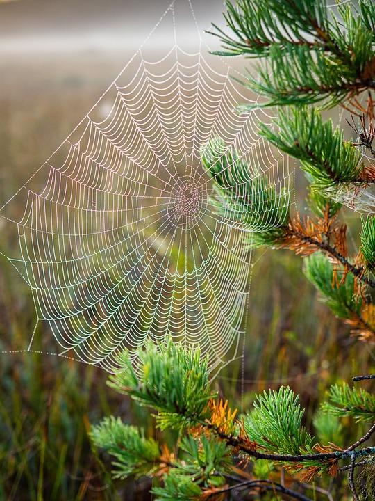 Cobweb, Morning, Nature, Network, Cobwebs, Moist, Green