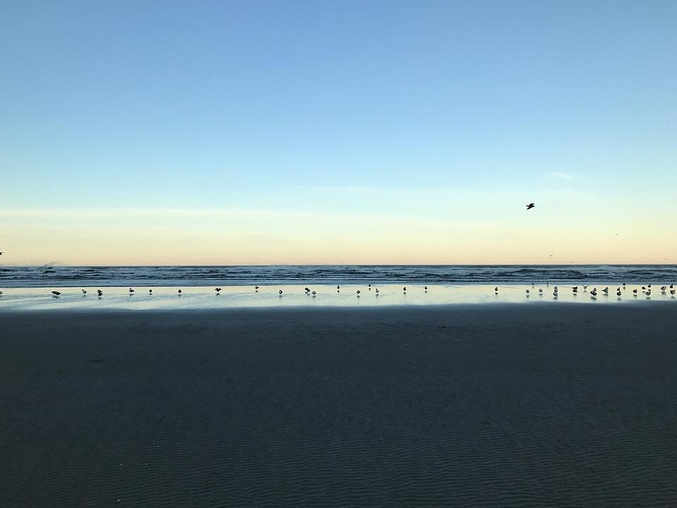 Beach, Seagulls, Peaceful, Morning, Sky, Sand