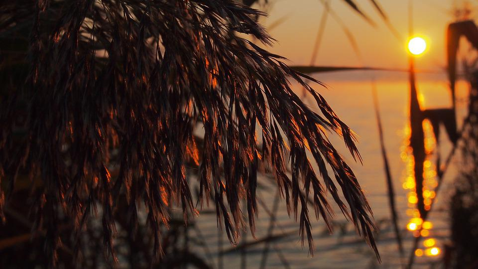 Dawn, Reed, Lake, Sunrise, Morning