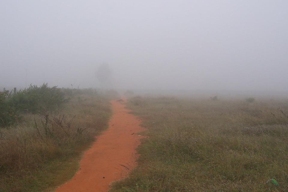 Path, Mist, Nature, Foggy, Season, Weather, Morning
