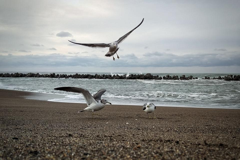 Morning, Sky, Sea, Beach, Seagull, Seabird, Wild Birds