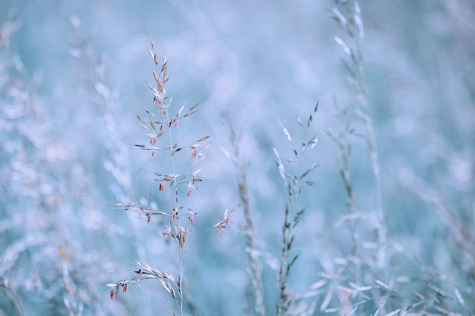 Grasses, Plants, Meadow, Spring, Field, Nature, Morning