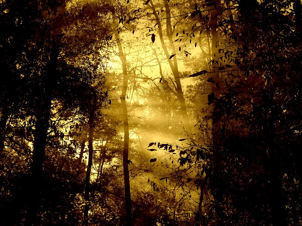 Morning, Fog, Morning Light, Trees, Nature, Sun Beam