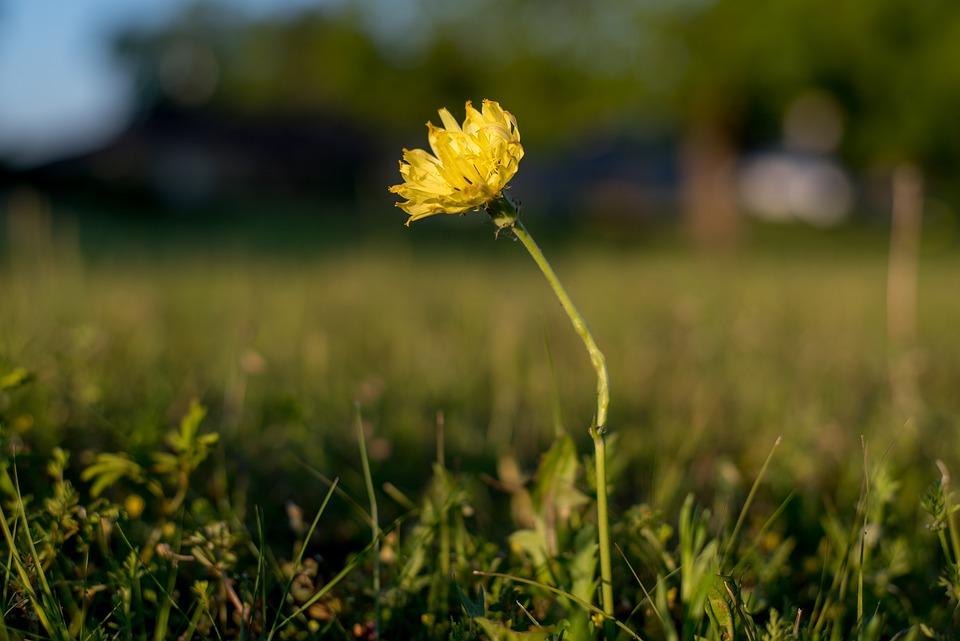 Flower, Morning, Yellow, Daylight, Sunrise