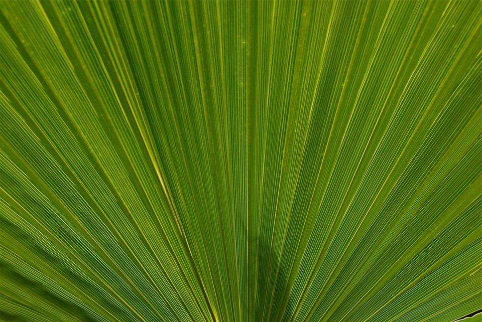 Plant, Leaf, Nature, Palm, Morocco, Exotic, Green