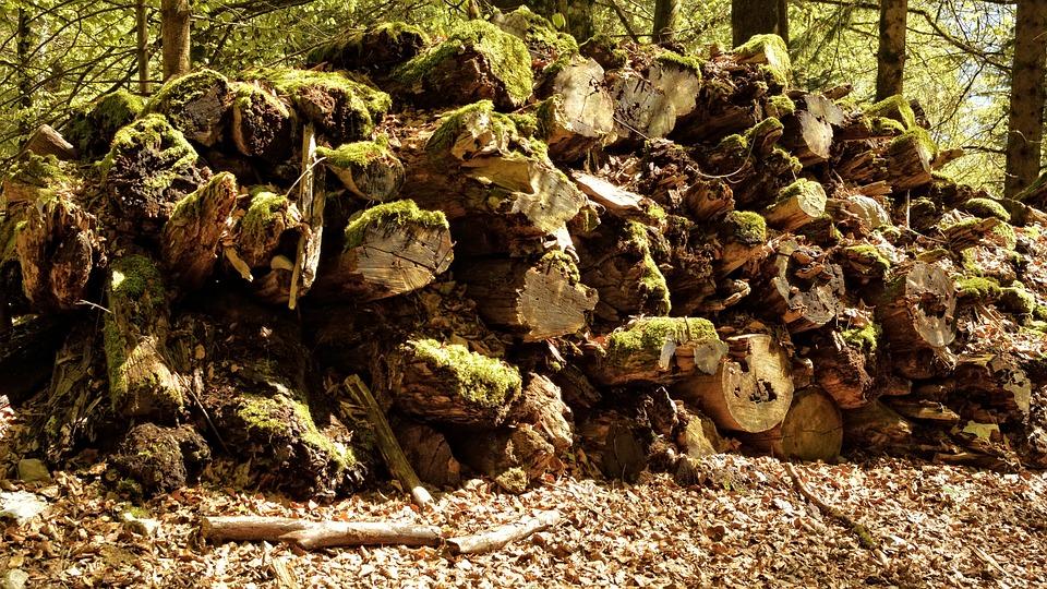 Old, Break Up, Morsch, Reverse Gear, Wood, Firewood