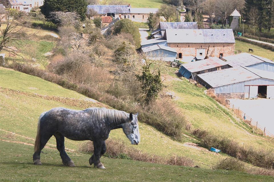 Horse, Horses, Animals, Animal, Mare, Pre, Farm, Morvan