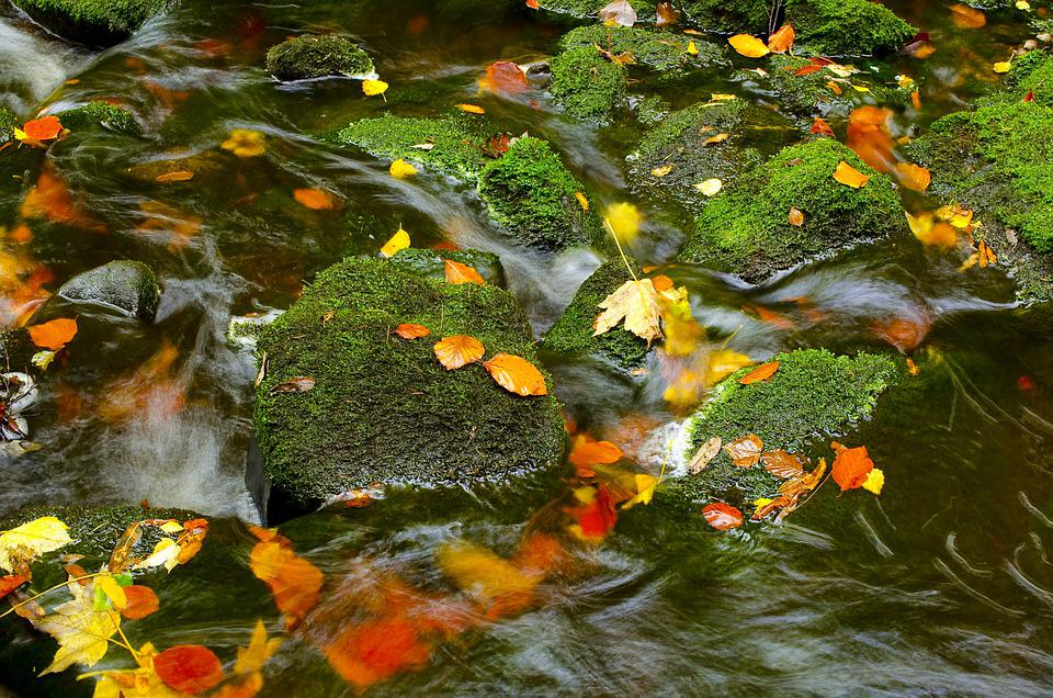 Moss, Stream, Autumn, Leaves, Nature, Fall, Outdoors