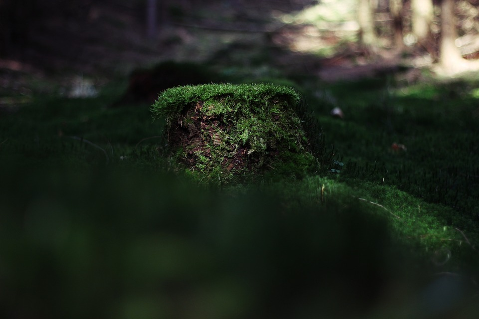 Tree, Moss, Bark, Green, Brown, Nature, Forest