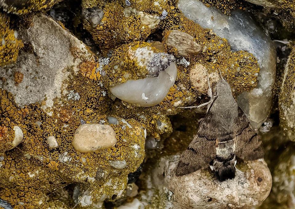 Rock, Moss, Hummingbird Butterfly, Nature, Beautiful