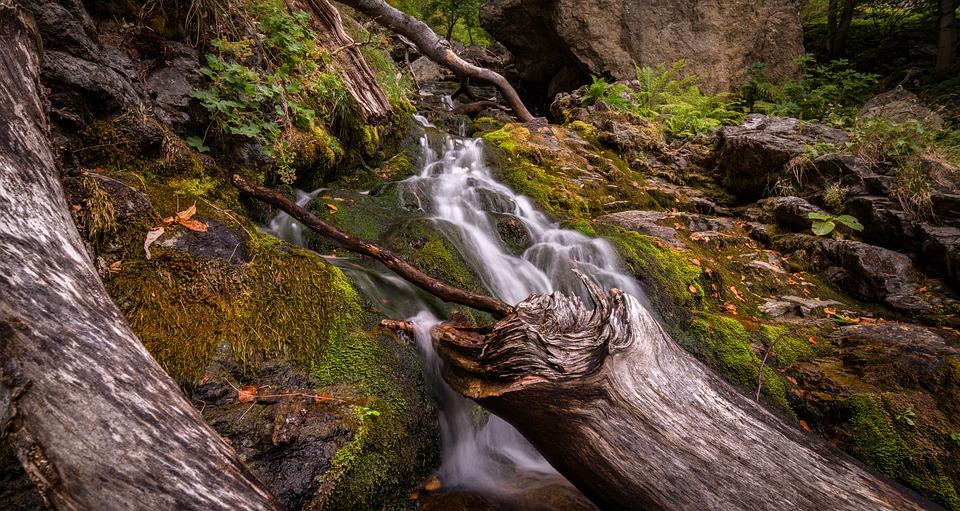 Creek, Landscape, Logs, Moss, Nature, Outdoors, River