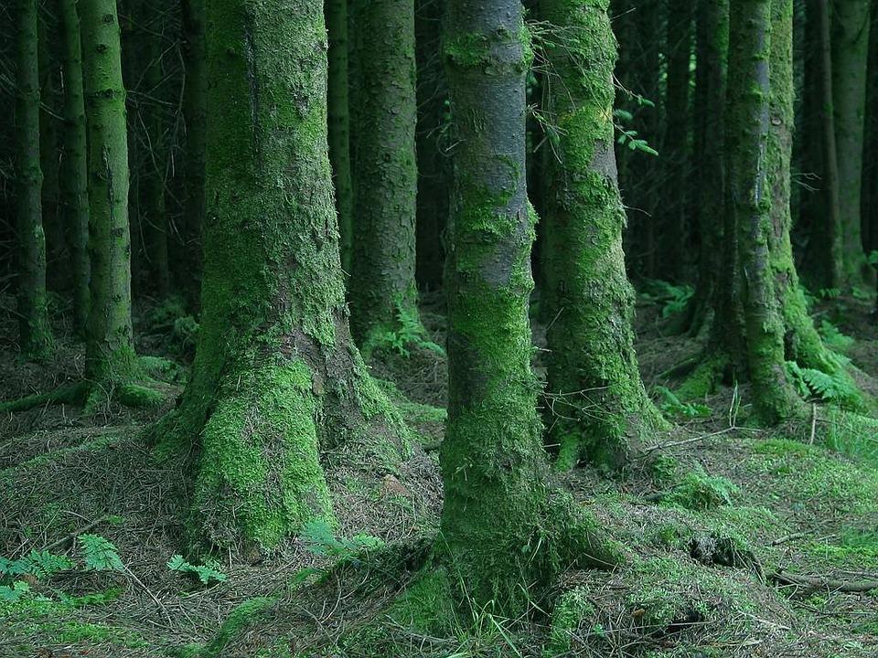 Forest, Trees, Moss, Moist, Wet, Dark, Close, Ireland