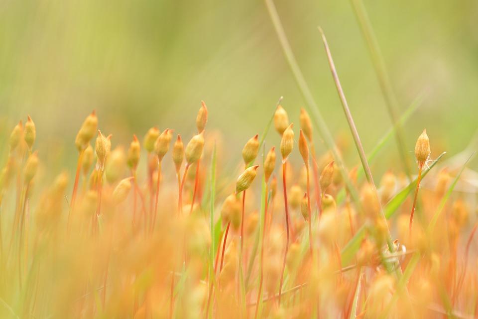 Moss Flower, Flower, Moss, Close, Nature, Blossom