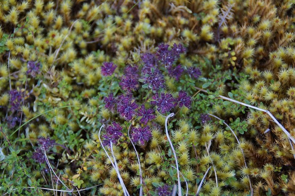 Moss, Bloom, Flowers, Close Up, Flower, Summer