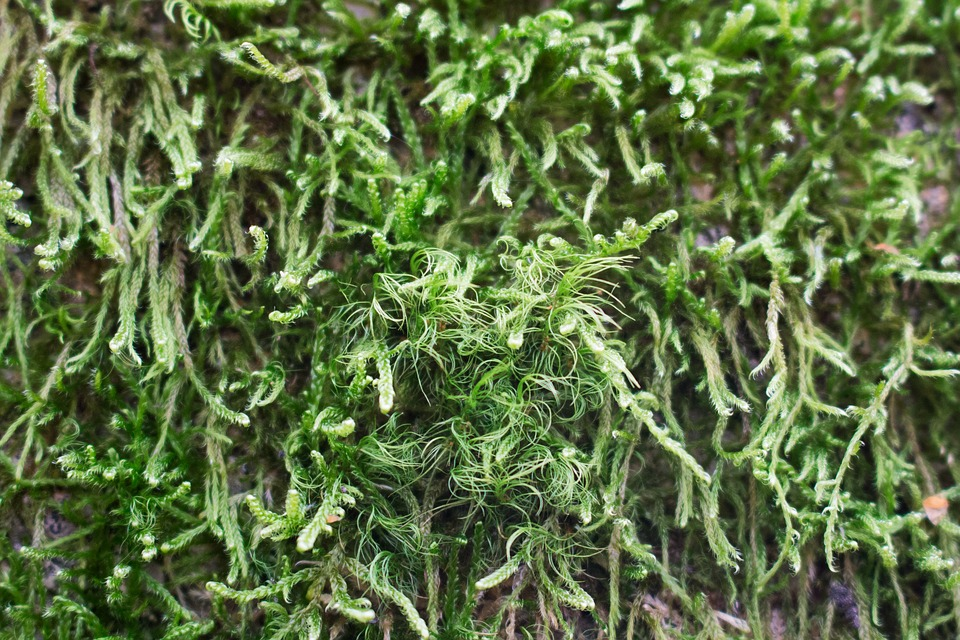 Moss, Green, Texture, Forest, Nature, Plant, Surface