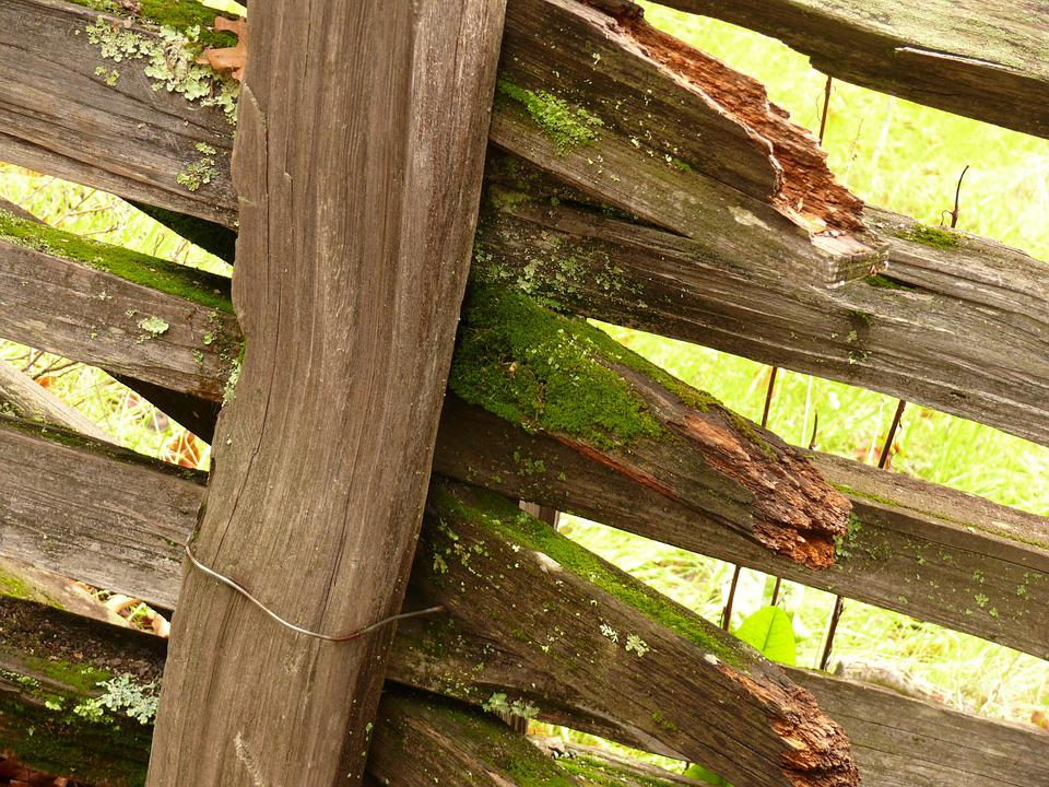 Fence, Wood, Old, Moss, California, Countryside, Green