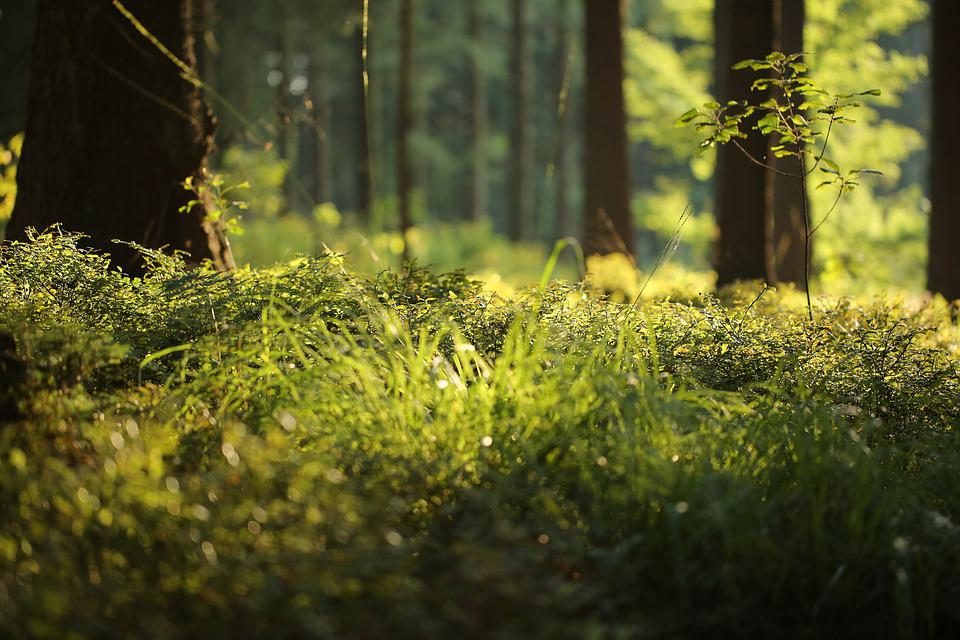 Forest Floor, Fern, Forest, Nature, Green, Plant, Moss