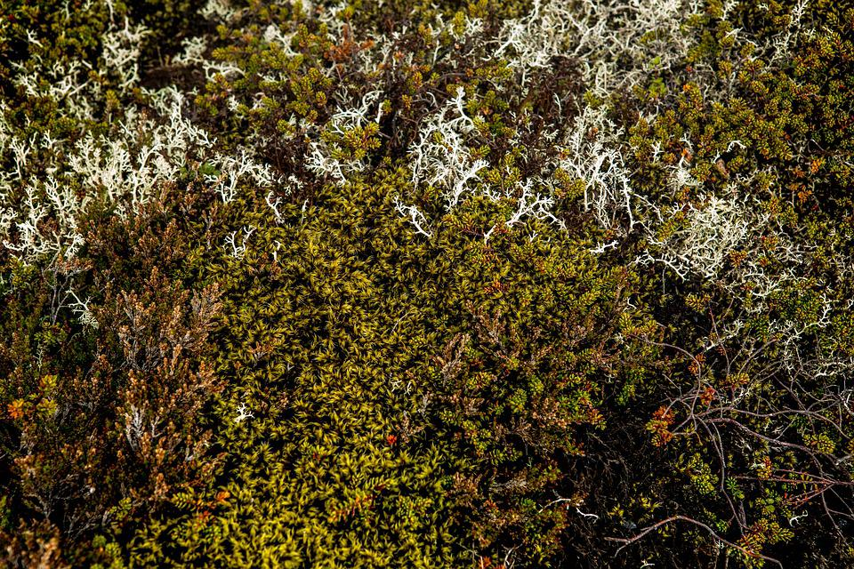 Moss, Dry Grass, Nature, Plants, Leaves, Autumn