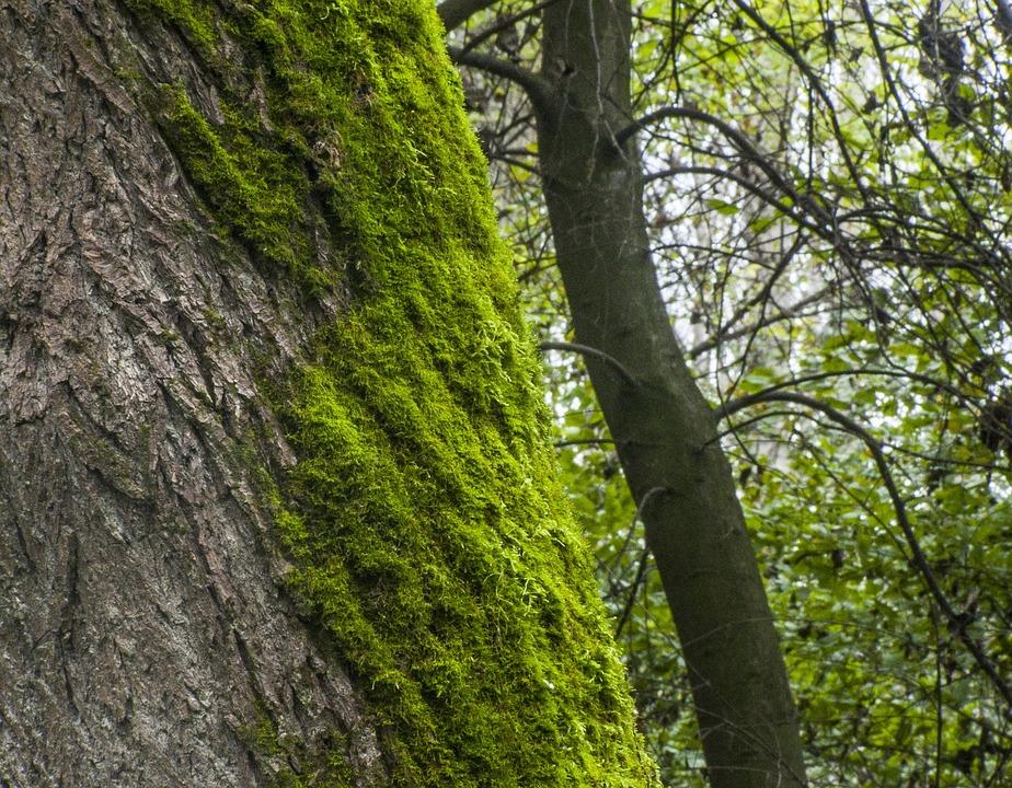 Moss, Log, Forest, Mohapárna
