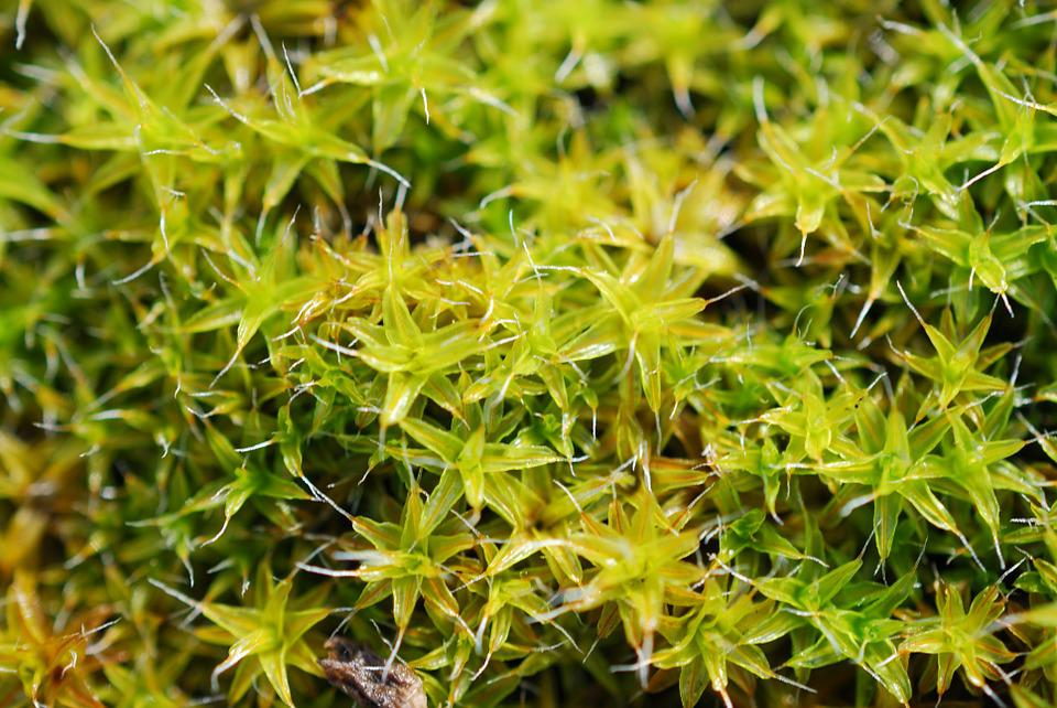 Green, Moss, Spring, Plant, Nature, Mohapárna