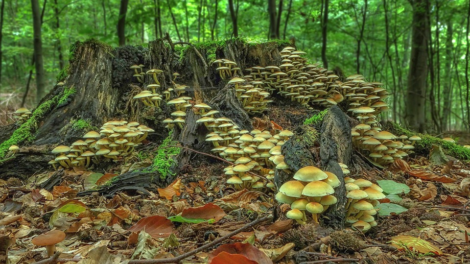 Mushroom, Mushroom Colony, Forest, Autumn, Moss