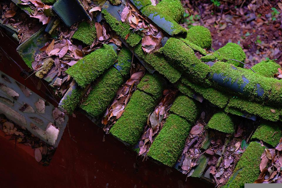 The Scenery, Leaf, Plant, Natural, Green, Tile, Moss
