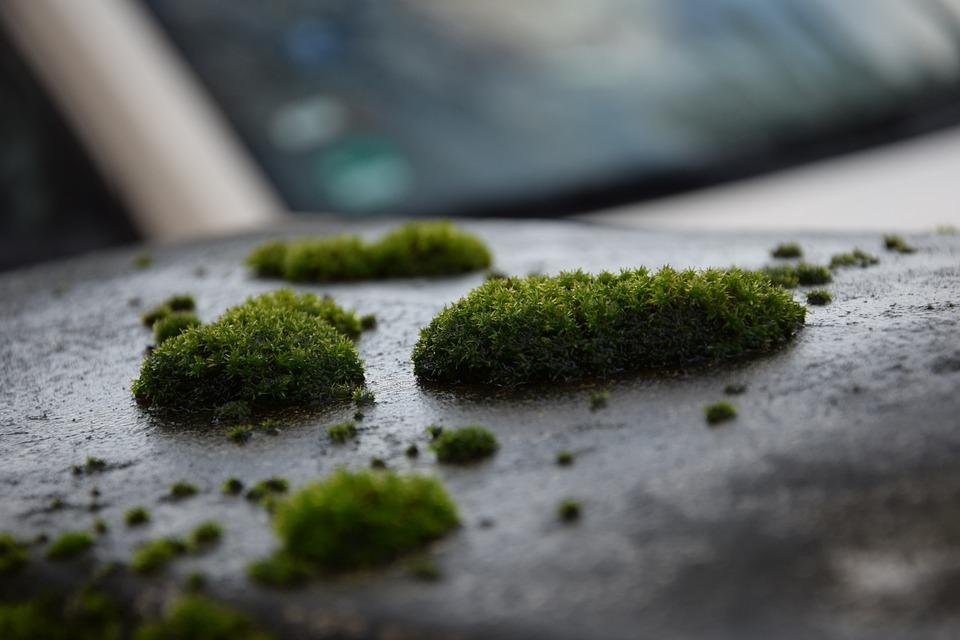 Moss, Plant, Wet, Moist, Nature, Green, Fouling