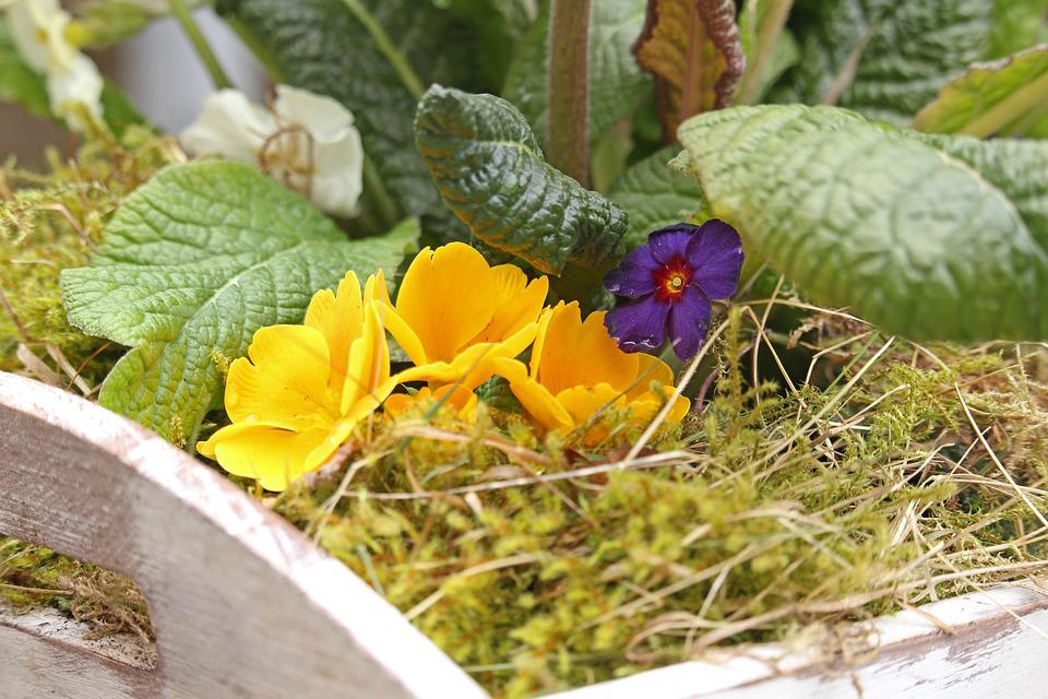 Primrose, Spring, Moss, Table Decorations