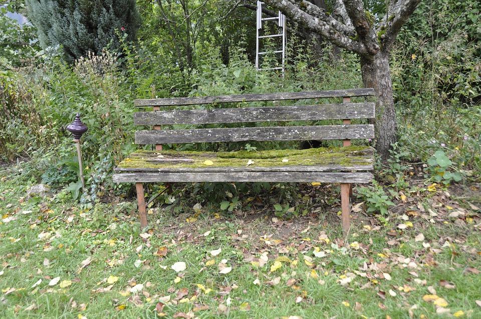 Bank, Garden, Nature, Moss, Garden Bench, Rest