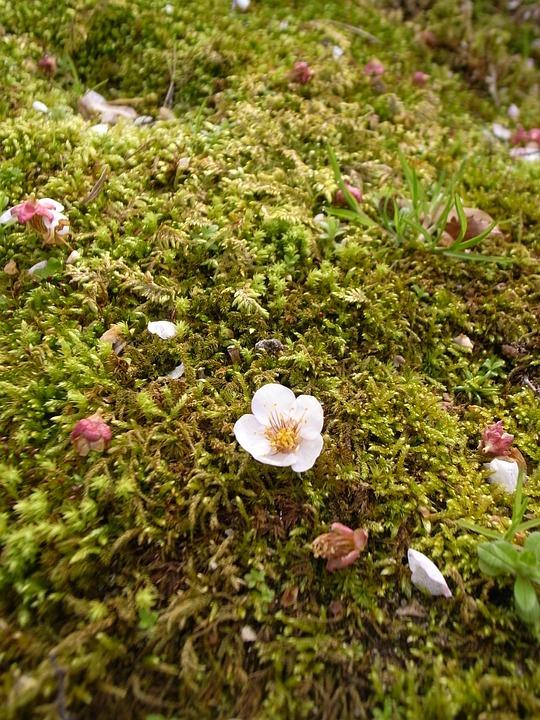 Plum, Moss, Shedding