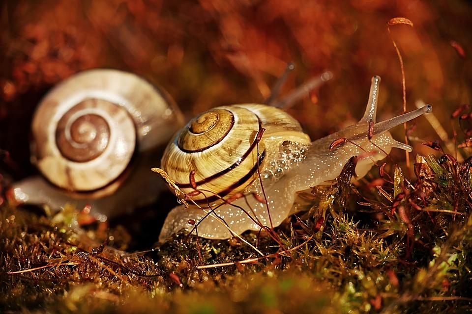 Snails, Mollusks, Animals, Snail Spiral, Shell, Moss